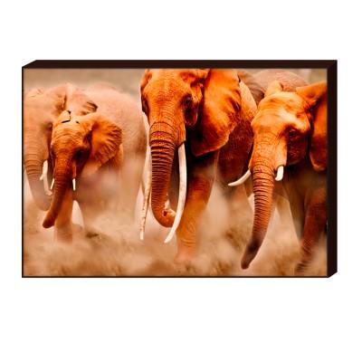 Лайтбокс Слоны H-1003 ToppostersЛайтбоксы<br>Габариты: 60x90х4см. Состав: Бумага, оргалит, багет из МДФ. Упаковка: Защитные уголки и термоусадочная пленка. Размер: 60,5х90,5х4,5 см. Крепление в комплекте.<br>